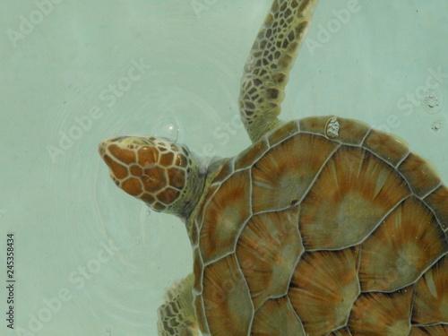 Poster Chamaleon Tiere Blumen Unterwasserwelt