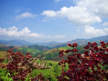 The Landscape Of Little Red Bush With Green Mountain And The Bluesky With Cloud
