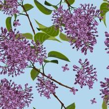 Spring Floral Background. Bran...