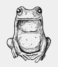 Sketch Of Frog. Hand Drawn Ill...
