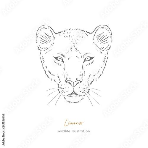 Fotografia, Obraz Symmetrical Vector portrait illustration of wild lioness cat