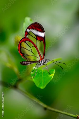 Foto auf Leinwand Schmetterling Closeup beautiful butterfly sitting on flower