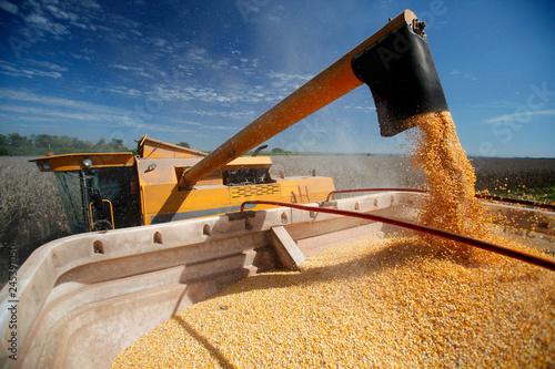 Fotomural  Corn Harvest