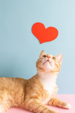 Cute Little Ginger Kitten With Red Heart From Paper, Valentine's Day