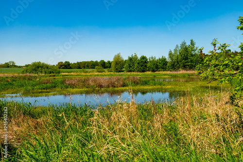 Fotografie, Obraz  View to a pond in the local recreational area Flaeming-Skate near Berlin, Germany