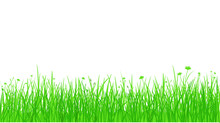 Silhouette Green Grass With Flowers On White Background
