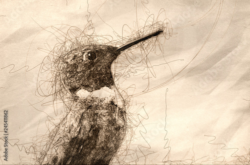 Valokuva  Sketch of a Ruby-Throated Hummingbird Profile