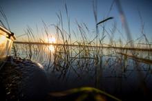 Canoe Through Wild Rice