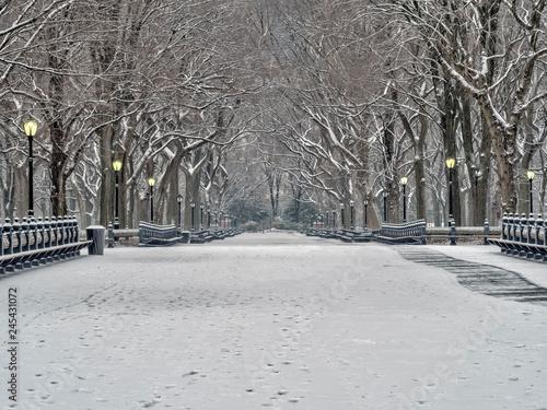 Obraz na plátně Central Park, New York City in winter
