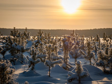 Wild Nature Of Midle Russia. Lot Of Snow, Sun And Winter