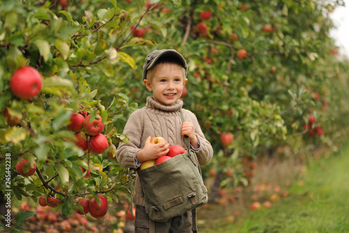 Foto A small smiling boy stands in an apple orchard and holds a bag of apples