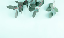 Eucalyptus Leaves And Branches On Pastel Pale Blue Background. Eucalyptus Branches Pattern. Flat Lay, Top View, Copy Space