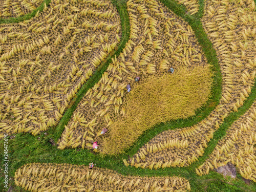 Fotobehang Rijstvelden Aerial view of rice fields High angle of rice field in rural Thailand
