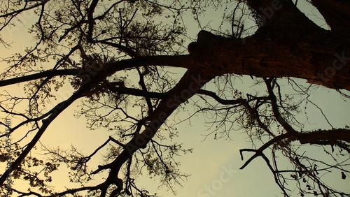 Photo sur Toile Oiseaux sur arbre OLYMPUS DIGITAL CAMERA