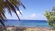 Palma y playa2