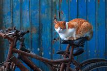 Tigerkatze Schläft Auf Fahrra...