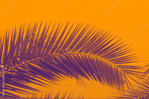palm leaves in a duotone red-blue gradient. Summer background.