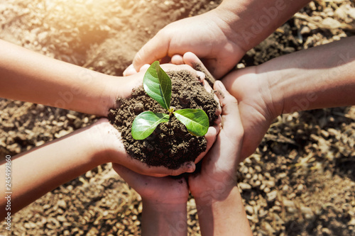 Obraz na plátně  two hand helping planting young tree for save world