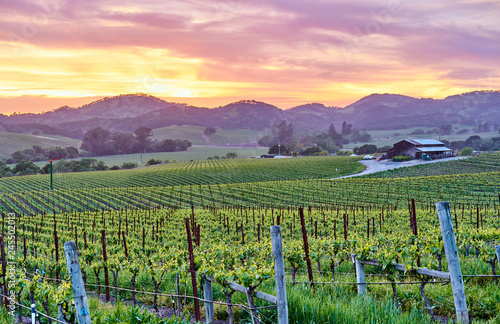 Tuinposter Verenigde Staten Vineyards at sunset in California, USA