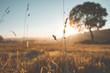 Leinwandbild Motiv Natur Eifel Sonnenaufgang  Feld Wiese