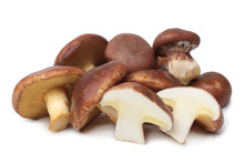 Suillus Luteus Mushrooms