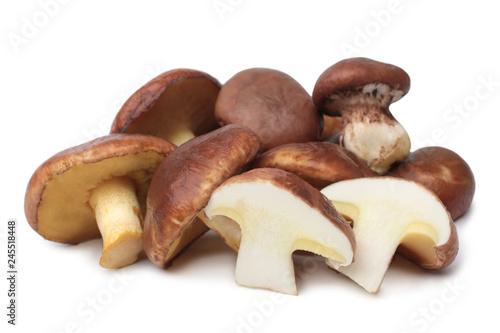 Suillus luteus mushrooms