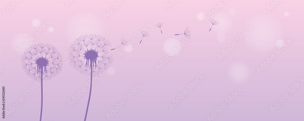 Fototapety, obrazy: dandelion silhouette with flying seeds on bright purple background vector illustration EPS10