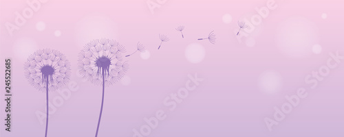dandelion silhouette with flying seeds on bright purple background vector illustration EPS10