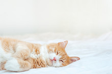 Cute Sleeping Ginger Cat At White Bed. Concept Of Calm And Cozy Comfort