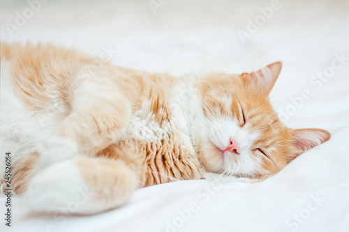 Fototapeta cute sleeping ginger cat at white bed. concept of calm and cozy comfort obraz na płótnie