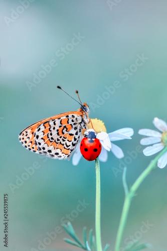 Fotografie, Obraz  Closeup   beautiful butterfly sitting on flower