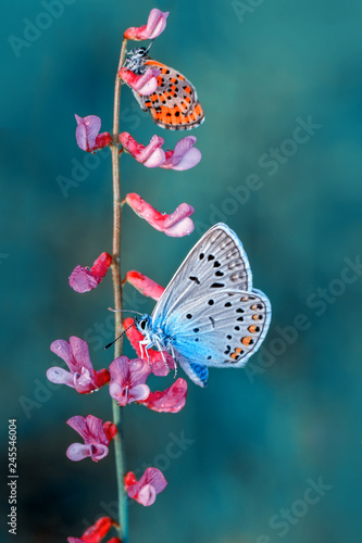 Fototapeta  Closeup   beautiful butterfly sitting on flower