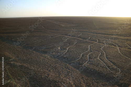 Poster Zuid-Amerika land The famous large ancient geoglyphs Nazca lines called Arbol (tree) in the evening sunlight, view from observation tower at Nazca desert, Ica region, Peru