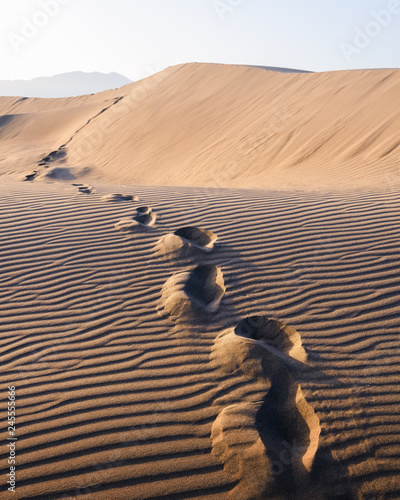 Poster de jardin Desert de sable Footprints on sand in the desert stretching into the distance. Hot landscape with sand dunes against the clear sky