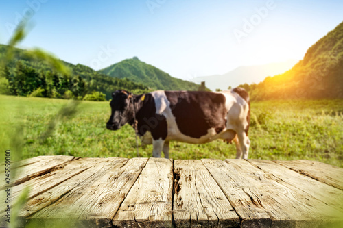Foto auf Gartenposter Kuh Table background of free space and cow on grass