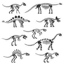 Dinosaur Skeletons Set. Dinosa...