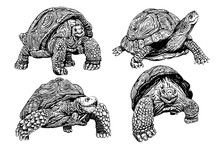 Graphical Set Of Tortoises Iso...