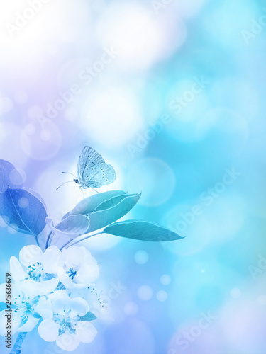 Apple blossom and butterfly vertical background