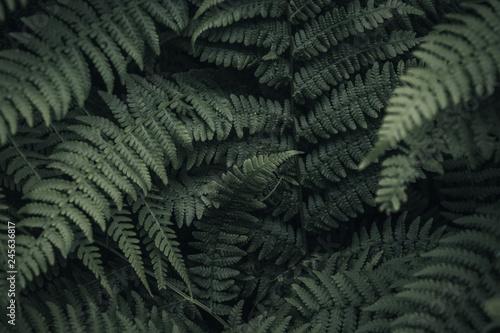 Fern's Throat - Ancient Forest, B.C.