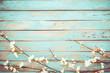 Leinwandbild Motiv Cherry blossom flowers on vintage wooden background, border design. vintage color tone - concept flower of spring or summer background
