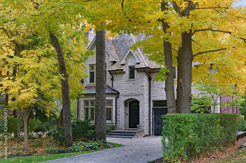 Fotografie, Obraz  tree lined residential street  with mature trees and fall color