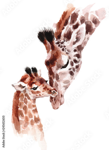 Photo Giraffes Mother and Baby Watercolor hand painted wild animal illustration isolat