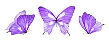 Watercolor Set Of Purple Butte...