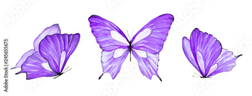 Obraz Watercolor set of purple butterfly isolated on white background - fototapety do salonu