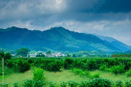 Foto op Plexiglas Groene The countryside scenery in spring