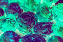 Surreal Flower Background. Fluorescent Rose Decor. Conceptual Floral Design.