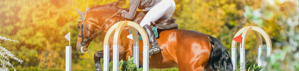 Rider in uniform perfoming jump at show jumping competition. Blur sunlight green trees as background.