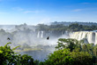 Birs at Iguazù Falls