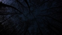 Stars Rotating Above Winter Trees Wide Angle Fisheye Time Lapse Looking Up 4k