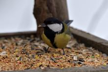 Grain Seeds For Feeding Tomtit Birds In Winter Snow